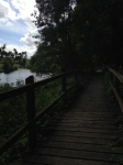 Boardwalk along the river in Silaire woods